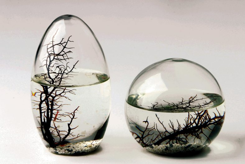 The Worldu0027s First Totally Enclosed Ecosystem. A Complete, Self Contained  And Self Sustaining Miniature World Encased In Glass.